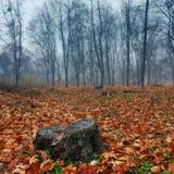 Dimma i parkera Arkivbild