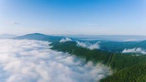 Dimma i pinjeskog Fotografering för Bildbyråer