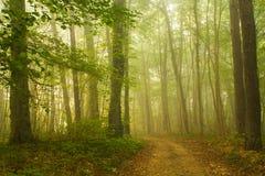 Dimma i skog Fotografering för Bildbyråer
