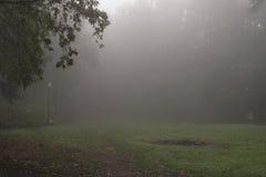Dimma i skog Arkivfoto