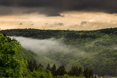 Dimma i skogen Arkivfoton
