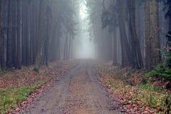 Dimma i skogen Arkivbilder