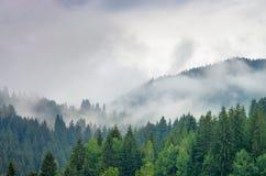 Dimma i skogen av sörjer träd i bergen royaltyfri bild