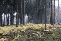 Dimma i skogen med ormbunkar arkivfoto