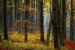 Dimma i skogen under höst Arkivbild
