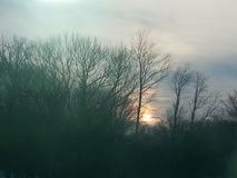 Dimma i treesna arkivfoto