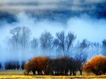 Dimma med trees och buskar royaltyfri foto