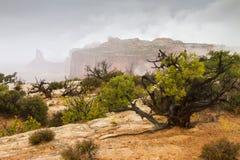 Dimma och mist på Canyonlands Royaltyfria Foton