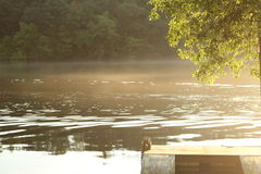 Dimma och skeppsdocka för sommarmorgonflod med badstegen Royaltyfri Foto