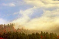 Dimma och skog Arkivbilder