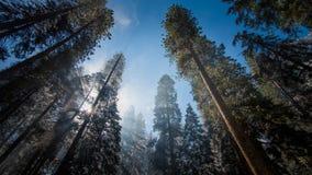 Dimma och snö på träd och klippor av den Yosemite nationalparken, Kalifornien i vinter under soluppgång Arkivfoto