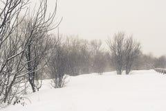 Dimma och snow Royaltyfria Foton
