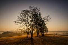 Dimma och träd Arkivbilder