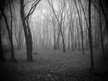 Dimma och träd Arkivbild