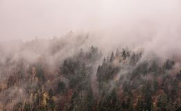 Dimma ovanför pinjeskogar royaltyfri bild