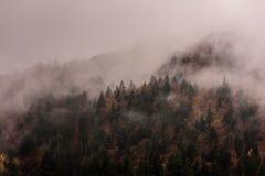Dimma ovanför pinjeskogar royaltyfri fotografi