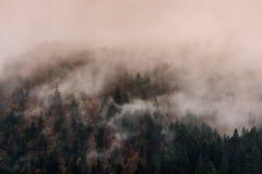 Dimma ovanför pinjeskogar arkivfoto