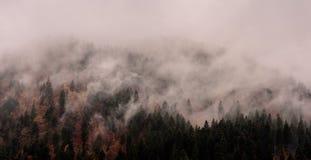 Dimma ovanför pinjeskogar royaltyfria foton