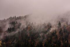 Dimma ovanför pinjeskogar Tät pinjeskog i morgonmist royaltyfri bild