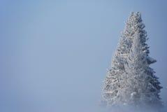 Dimma på en frysa dag Arkivbilder