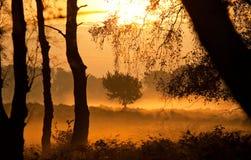 Dimma på gryning i skogen arkivbilder