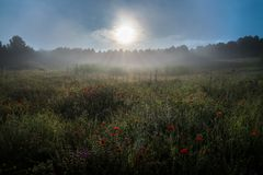 Dimma på soluppgången royaltyfria bilder