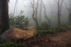 Dimma skog, Portugal, mystik, natur Arkivfoto