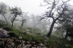 Dimma som är hög på berget royaltyfria foton