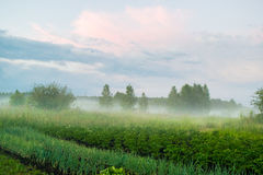 Dimma under det lantliga landskapet Ryssland för äng Arkivfoto