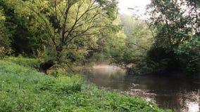 Dimma under floden stock video