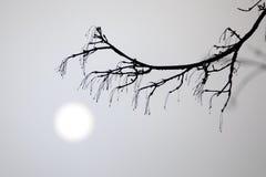 dimmamorgon Arkivfoto