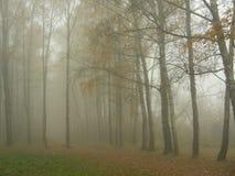 Dimman steg ned in i skogen Royaltyfria Bilder