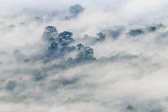 Dimman täckte skogen på den Pha Mo I Daeng klippan Royaltyfria Bilder