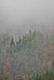 dimmaskog Arkivfoton