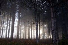 dimmaskog Royaltyfri Bild