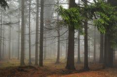 dimmaskogbana Arkivbilder