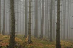 dimmaskogbana till Royaltyfria Bilder