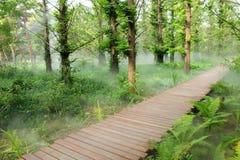 dimmaskogmorgon Royaltyfri Foto
