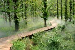 dimmaskogmorgon Royaltyfri Fotografi