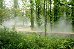 dimmaskogmorgon Arkivfoto