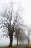 dimmavägtrees arkivbilder