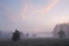 Dimmig äng efter solnedgång Royaltyfri Bild