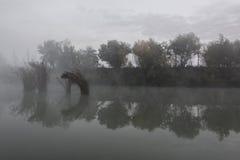 dimmig dag Fotografering för Bildbyråer
