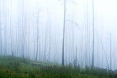 Dimmig dag i skogen på Blacket Hills royaltyfria foton
