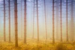 Dimmig drömlik skog med solsken på morgonen royaltyfria bilder