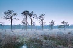 Dimmig frostig morgon på träsk Arkivbild