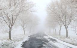 Dimmig/frostig vinterväg med träd royaltyfria foton