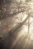 Dimmig fruktträdgård Fotografering för Bildbyråer
