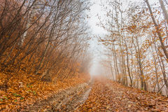 dimmig höstskog Fotografering för Bildbyråer