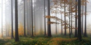 Dimmig höstskog efter regn Arkivbild